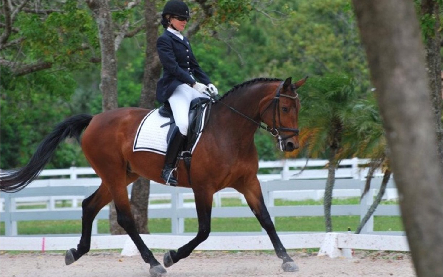 EllieScofield_Dressage_slide